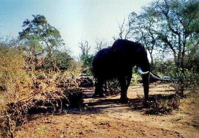 krugerparkHoe Groot Is Krugerpark.htm #7